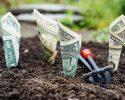 plantación de dinero